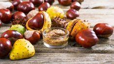 Kaštany, plody stromu jírovec maďal, léčí revmatismus, dnu, kašel, bolesti zad i hlavy. Kaštany pomáhají i v kapse a v posteli. Recepty na tinkturu a mast Edema Causes, Home Remedies, Natural Remedies, Tart Cherry Juice, Natural Diuretic, Mustard Oil, Oregano Oil, Grape Seed Extract, Chestnut Horse