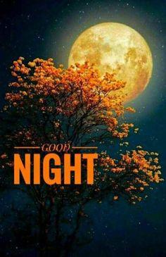 Good night my sweetie 😊😘❤ THX so. Beautiful Good Night Images, Romantic Good Night, Cute Good Night, Good Night Gif, Good Night Sweet Dreams, Good Night Moon, Good Night Quotes, Morning Quotes, Good Night Friends Images