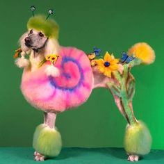 Crazy Dog Grooming