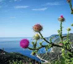 Beautiful view of the Aegean sea from the old town (Chora) in Alonnisos Greece.