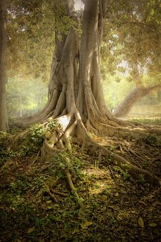 """""""Roots deeply tangled"""""""