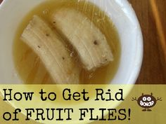 The Easiest Way to Get Rid of Fruit Flies