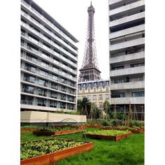 Our very own 600 m² vegetable garden at the foot of the Eiffel Tower.