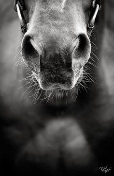 ♥ Horse closeup