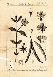"buffon botanical french 1775 engraving 4 x 6""  $25 - 15"