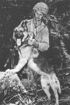 War-Dogs-of-Vietnam