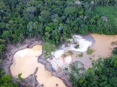 """A pandemic-created 'gold rush' in the Amazon is destroying Indigenous lands 