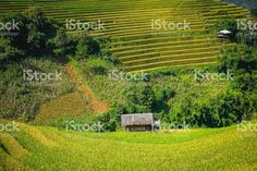View of house in rice terrace at mu cang chai royalty-free stock photo