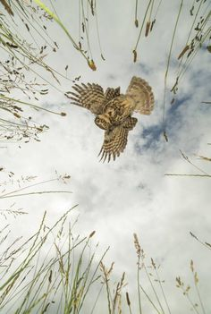 A photographer caught this stunning picture of an owl on the hunt
