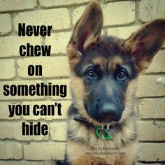 Never chew on something you can't hide.