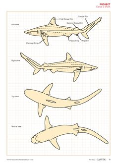 Ironwood Shark Wood Carving - Hand-Carved from Arizona Artist! Fish Wood Carving, Wood Carving Faces, Dremel Wood Carving, Wood Carving Designs, Wood Carving Patterns, Bone Carving, Wood Patterns, Carved Wood Wall Art, Art Carved