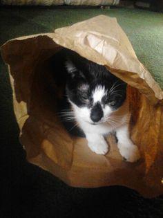 Raynie in a bag!