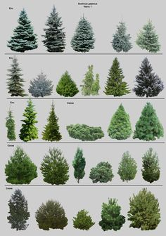 Privacy landscape shrubs 70 Ideas - Flower Garden İdeas İn Front Of House Evergreen Landscape, Evergreen Garden, Flower Landscape, Landscape Design, Garden Design, Dwarf Evergreen Trees, Fence Design, Landscaping Trees, Driveway Landscaping
