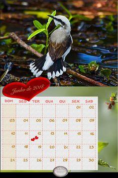 CalendarioJunho-de2018-Calendarios2018-lenalima-lenalimafotosbh-lenalimafotografaembh-fotografasdeanimaisembh-animais-gatos-