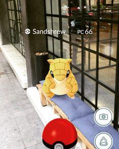 Horas de sala de junta gratis a quien atrape un #pokemon en @thepoolmx ya tenemos al primero.
