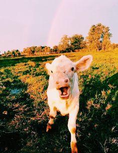 Animals – The Toledo Zoo &amp Cute Baby Animals, Farm Animals, Animals And Pets, Funny Animals, Wild Animals, Cute Creatures, Beautiful Creatures, Animals Beautiful, Baby Cows