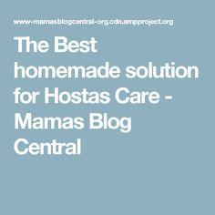 The Best homemade solution for Hostas Care - Mamas Blog Central