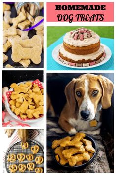 Homemade Dog Treats Round-Up - The Best Dog Safe Cake Recipes for Your Pets Bacon Dog Treats, Pumpkin Dog Treats, Diy Dog Treats, Homemade Dog Treats, Dog Treat Recipes, Dog Food Recipes, Cake Recipes, Puppy Treats, Pumpkin Pies