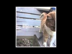 Braveyoung - Bloom