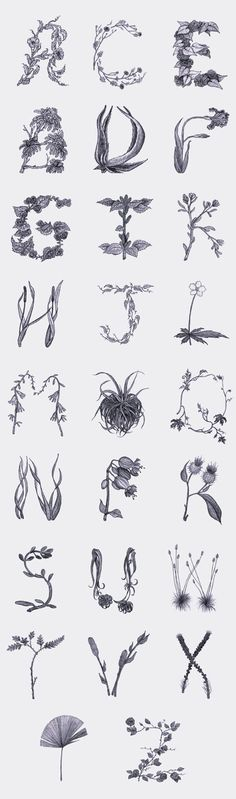 BOTANICAL ALPHABET // Sasha Prood // DesignLoveFest