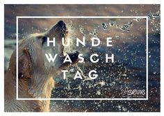 Doggy Style Hundewaschtag im Hundefeinkostladen Wien! Save the date: August 2018 11 August, Save The Date, Shampoo, Style, Organic Beauty, Pet Dogs, Swag, Wedding Invitation, Outfits