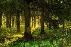 Деревья, Леса, Освещение, Восход Солнца
