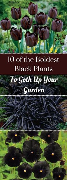 10 of the Boldest Black Plants to Goth Up Your Garden If you want to add drama to your garden, look no further than this dark trend. People are using black plants to create natural borders around their flower beds and sprinkle in stunning contrast. Garden Types, Gothic Garden, Witchy Garden, Black Garden, Organic Gardening Tips, Vegetable Gardening, Hydroponic Gardening, Indoor Gardening, Indoor Plants