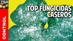 Vamos a explorar los fungicidas caseros que podes encontrar en tu casa. Sirven especialmente para prevenir el ataque de hongos y combatirlos cuando recién aparecen. Seguí leyendo para conocer estos 10 fantasticos fungicidas caseros