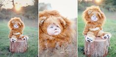 cutest ever.  baby lion costume