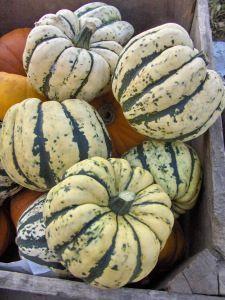 tips voor kweken, bewaren en plukken van pompoenen