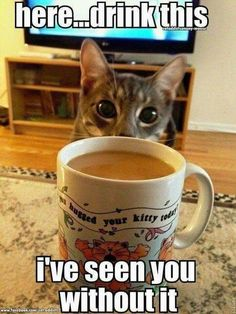 coffee humor 15 'Cats Hyped Up On Coffee' Memes To Get Your Through This Day - World's largest collection of cat memes and other animals Funny Shit, Funny Animal Memes, Cute Funny Animals, Funny Animal Pictures, Funny Cute, Funny Memes, Hilarious, Jokes, I Love Cats