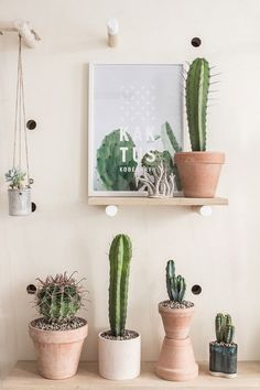 A cactus is a superb means to bring in a all-natural element to your house and workplace. The flowers of several succulents and cactus are clearly, their crowning glory. Cactus can be cute decor ideas for your room. Decoration Cactus, Decoration Plante, Home Decoration, Succulent Gardening, Cacti And Succulents, Cactus Plante, Cactus Cactus, Garden Cactus, Deco Nature
