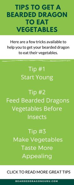 Getting your bearded dragon to eat its vegetables can be tricky sometimes. Vegetables may not be your bearded dragon's favourite food, however, they are important to its health.It's no secret that bearded dragons can be very picky when it comes to eating. #beardeddragoncare #beardeddragondiet #pethealth Bearded Dragon Heat Lamp, Bearded Dragon Substrate, Bearded Dragon Food List, Bearded Dragon Care Sheet, Bearded Dragon Habitat, Bearded Dragon Supplies, Pet Lizards, Dragon Tail, Teeth Care