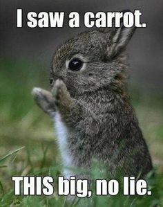 This bunny is so cute.