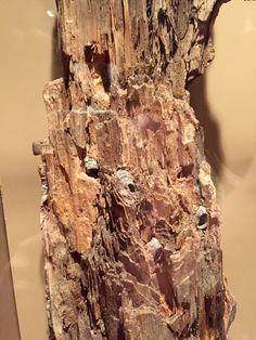 Atlanta Historic Museum.  Bullet ridden tree stump with civil war bullets