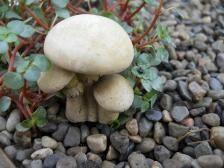 Mushroom Cluster for 5 Pick for Fairy Garden