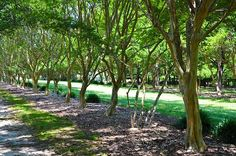 I uploaded new artwork to fineartamerica.com! - 'Norfolk Botanical Garden 3' - http://fineartamerica.com/featured/norfolk-botanical-garden-3-lanjee-chee.html
