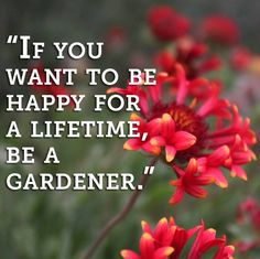 Gardening can give oneself so much joy and happiness!