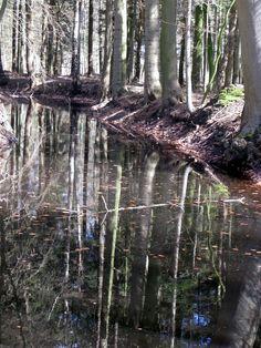 Wasserspiegelungen im wunderbaren Stikelkamper Wald, Ostfriesland