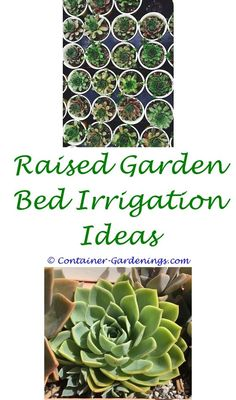 Creating A Home Vegetable Garden