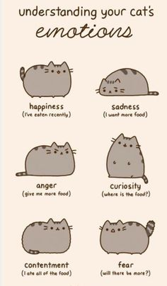Pusheen emotions