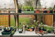 Inside a Cultivar greenhouse.
