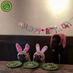Real friend. Funny dogs gif