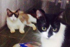 Agora se chama Lola & Belinha :DDD