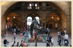 Natural History and Science Museum - London - FREE!