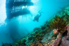 Critters Scuba Diving  Lots more diving equipment can be found at - http://scuba.megainfohouse.com