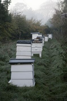 bee hives and mistiness.  Deans Court Kitchen Garden (Photo Tom Laybourne)