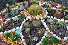 This would be great for our dry Colorado climate. Pebble Garden, Mosaic Garden, Garden Art, Fairies Garden, Succulent Bowls, Parks, Succulents Garden, Cactus Plants, Beautiful Flowers