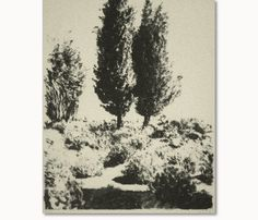 "Arikha Avigdor Cypress Lithography 62X45cm   24.4""X17.7"""