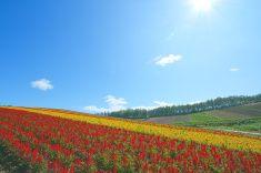 Flower field and shiny sky stock photo